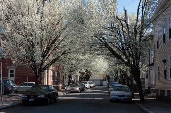 Spring on Prince Street