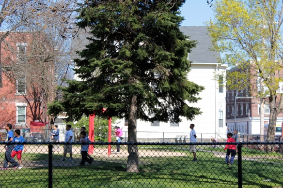 Spring play by the pine tree