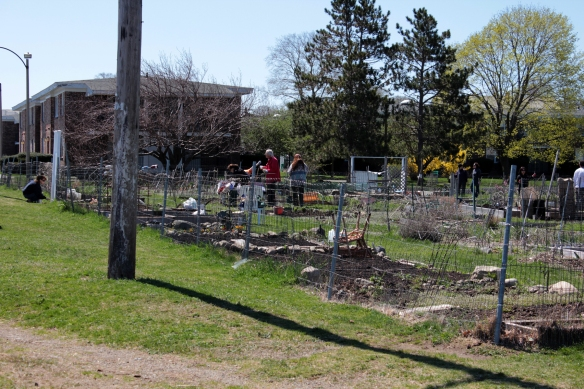 Community garden volunteers - springtime actions